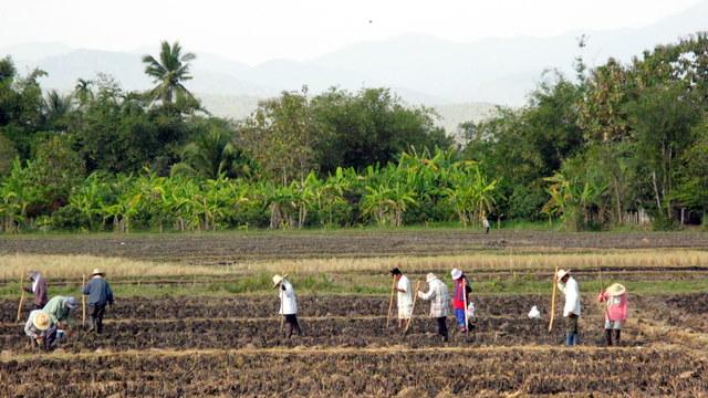 cottonのブログ-農業